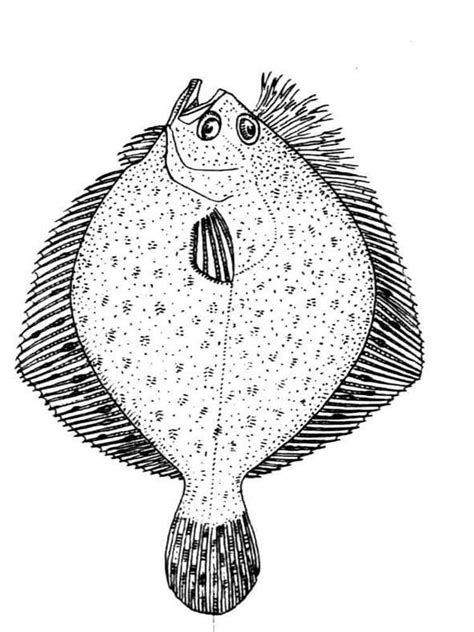 flounder fish coloring pages   print flounder fish coloring pages
