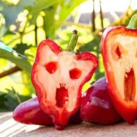 Alimenti Geneticamente Modificati Alimentazione Ecco I Sette Pi 249 Comuni Alimenti