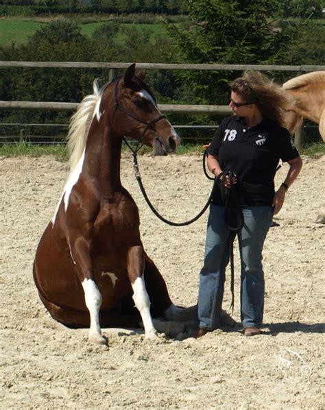 dr claudia muench  ist bodenarbeit mit dem pferd