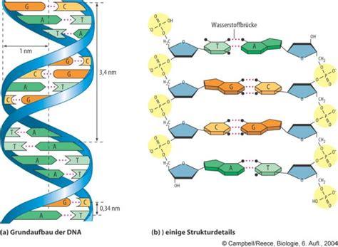 Der Zaun Arten Materialien Aufbau by Dns Theoretisches Material Biologie 12 Schulstufe