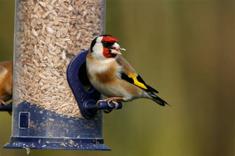 feeders that attract birds to the garden
