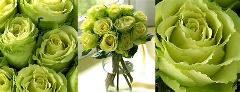 green roses  green head