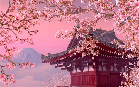 blooming sakura  gallery image