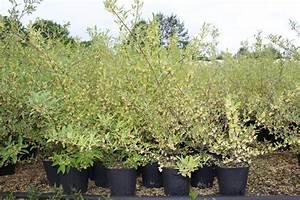 Hopfen Im Kübel Pflanzen : pointilla amoroso ~ Markanthonyermac.com Haus und Dekorationen
