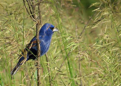 indiana dunes birding festival coming may 7 10 2015