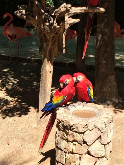 รูปภาพ : ธรรมชาติ, ปีก, สัตว์ป่า, สีแดง, ร้อน, มีสีสัน, ขน ...
