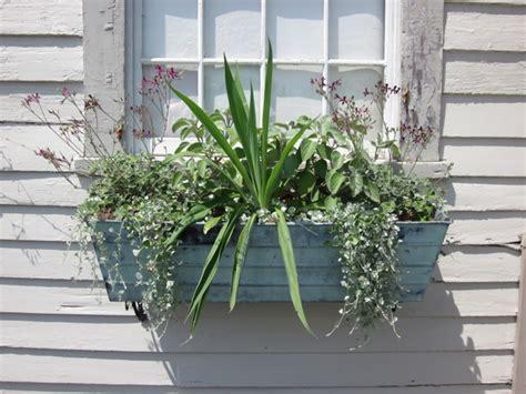 plante pour chambre quelle plante pour une chambre quelle plante d 39 int