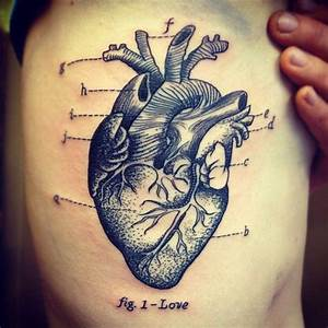 1000  Ideas About Human Heart Diagram On Pinterest