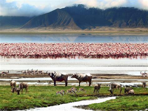 Serengeti Safari, Ngorongoro & Zanzibar  Get A Free Quote