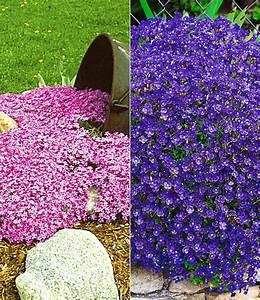 Bodendecker Blau Blühend Winterhart : bodendecker polsterstauden kollekti polsterstauden bei ~ Michelbontemps.com Haus und Dekorationen