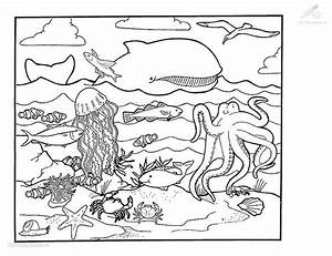 Squid Coloring Page