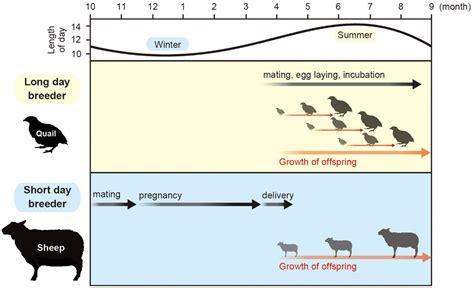 animals breeder algebra activities short