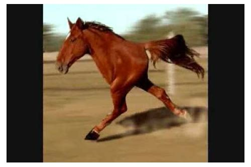 retarded running horse music download