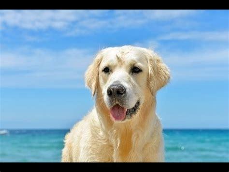 Italien Urlaub Am Meer Mit Hund Rimini