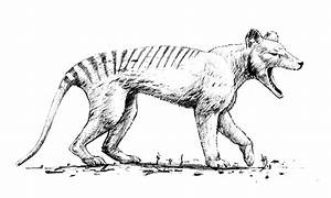 Thylacine coloring page - Animals Town - animals color ...