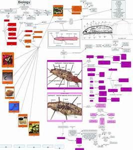 Phylum Annelida  Phylum