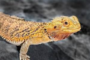 Große Reptilien Für Zuhause : namen f r reptilien ~ Lizthompson.info Haus und Dekorationen