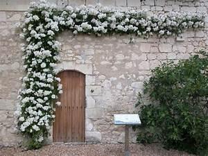 Rosier Grimpant Blanc : plantes grimpantes projets op ra construit ~ Premium-room.com Idées de Décoration