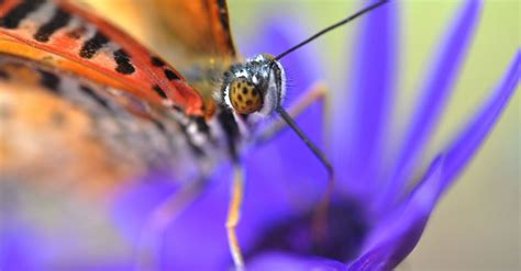 join   world  macro photo contest  win prize