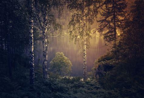 Gloomy Forest Background Free Stock Photo  Public Domain