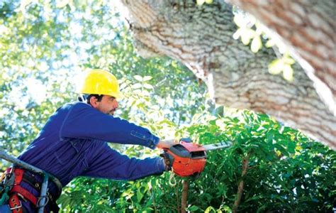 topping techniques   bad  trees homeowners