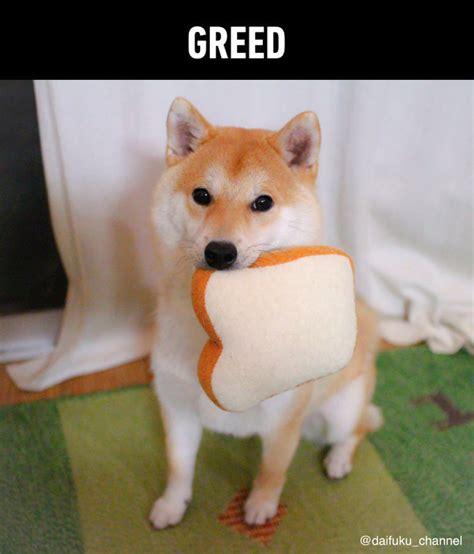 dog  good boy  doggo sins   dog