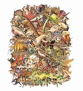 Animalia Cluster sepia reduced | Scenario Journal