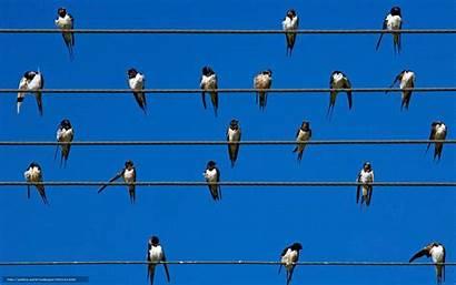 Bing Birds Wire Wallpapers Animals Sky Background
