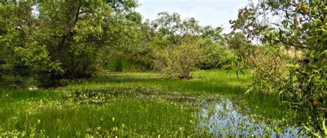 madrona marsh preserve nature center discover torrance