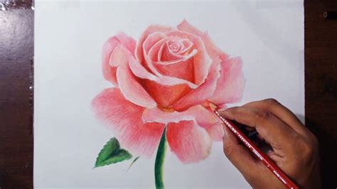 Drawing A Rose Flower Drawing Series 1 Prismacolor
