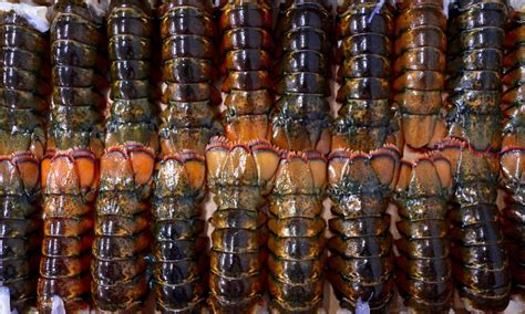Lobster tails decal sticker seafood fresh dinner special catch caught. Wholesale Frozen Lobster Tails - Canned Crab Meats, Canned ...