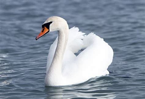swan anorexia support group beat