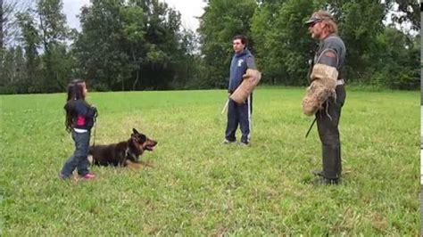 youtube dressage chien berger allemand america s best