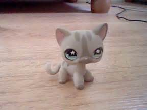 lps shorthair cats for lps shorthair cat lps