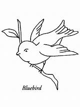 Bluebird Coloring Pages Heron Birds Western Printable Template Bird Templates Recommended Getcolorings sketch template
