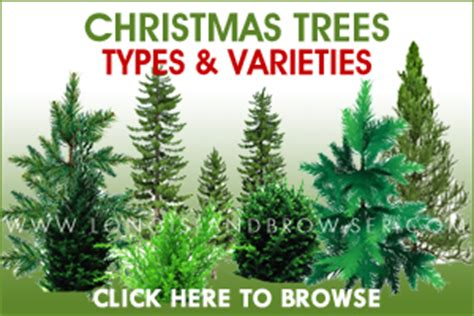 island winter events guide events trees farms longislandbrowser