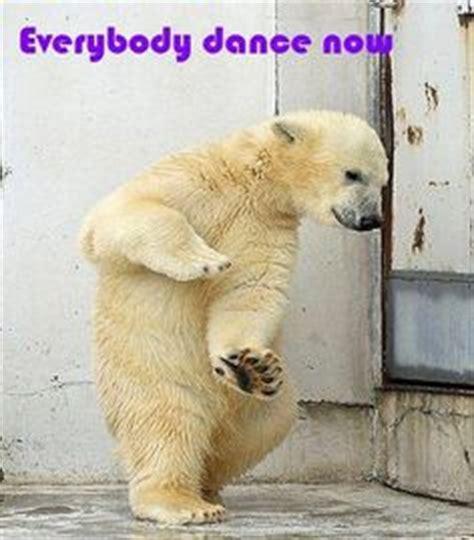images  dancing animals  pinterest dancing