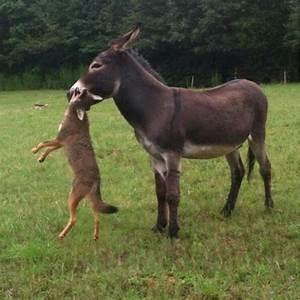Servicemix Vs Mule