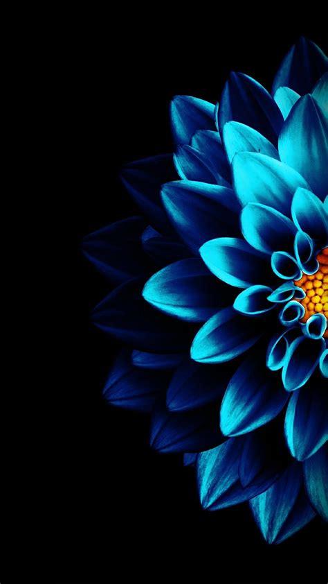 Flower Iphone Black Background Wallpaper by Pin By Salman Zamindar On Wallpaper Fleurs