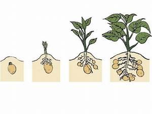 O2online De Go To Rechnung : como fazer crescer batatas no computador ~ Themetempest.com Abrechnung