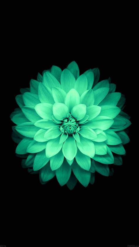 ad apple green lotus iphone  ios flower papersco