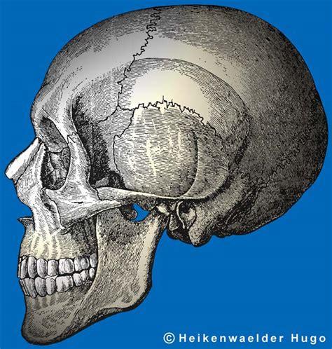 head wikidoc