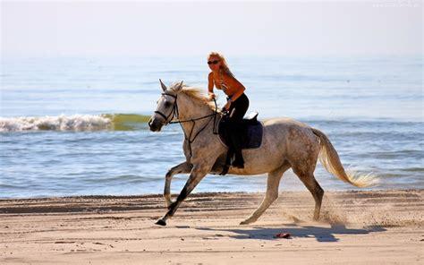 horses  beach wallpaper wallpapersafari