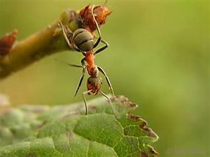 Ameisen Im Winter : naturdetektive f r kinder ameisen und ihr nest ~ A.2002-acura-tl-radio.info Haus und Dekorationen