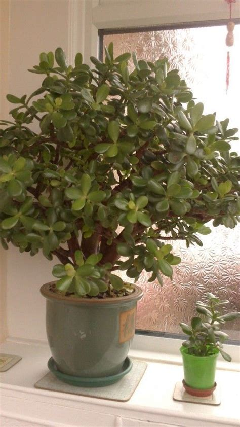 indoor house plants  names  pictures house plants