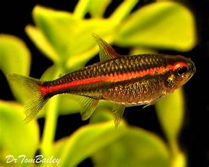 "Search Results for ""Orange Tetra Fish"" – carinteriordesign"