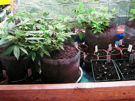 Diy Grow Cabinet by How To Build A Secret Grow Cabinet For 200