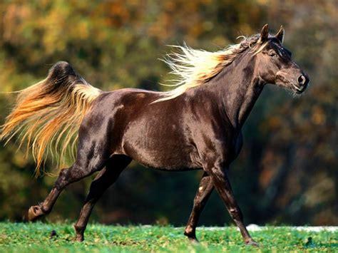 American Quarter Horse   The Life of Animals