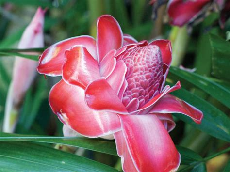 tropical plants of hawaii tropical plants at the hawaii tropical botanical garden hgtv