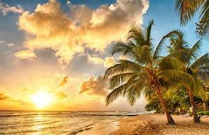 tropical paradise beach palms sea ocean sunset beach sea ...